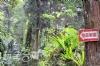 溪頭住優良森林山莊