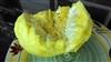 刺果番荔枝