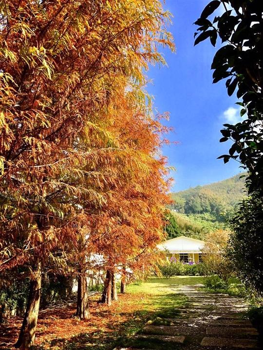 下午茶花園入口