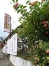 桃之園-阿嬤的私房菜