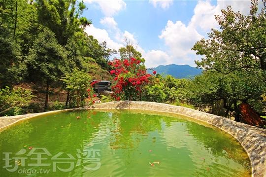 新社民宿‧橄欖樹夢想園地