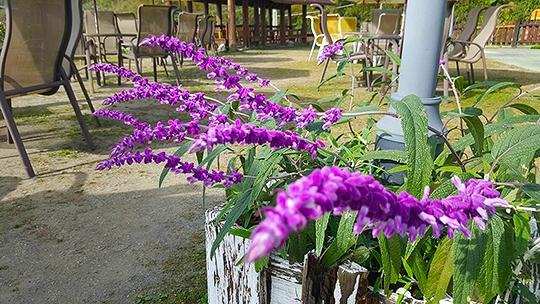 阿里山雲瀑谷觀景咖啡民宿