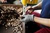 新社·菇早味-特殊烘培冬菇