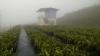 阿里山花舞山嵐農莊