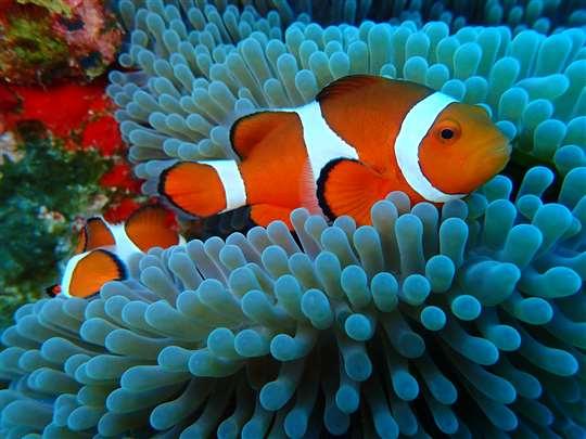 綠島月光城堡潛水中心Moos Diving Center