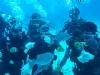 綠島諾亞潛水民宿