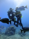 綠島‧藍莎潛水中心